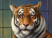 Striped Metal Prints - Tiger in Trouble Metal Print by James W Johnson