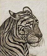 Photomanipulation Drawings Prints - Tiger IV Print by Debbie Portwood