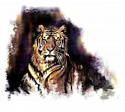 Tiger Pastels - Tiger by James Robinson