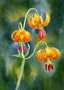 Watercolor Tiger Prints - Tiger Lilies #2 Print by Sharon Freeman