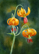 Watercolor Tiger Prints - Tiger Lilies #3 Print by Sharon Freeman