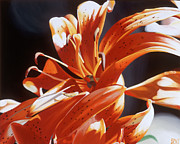 Botanical Paintings - Tiger Lily 2 by Sharon Von Ibsch
