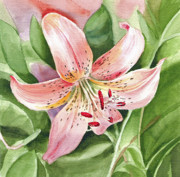 Watercolor Tiger Framed Prints - Tiger Lily Framed Print by Irina Sztukowski