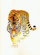 Watercolor Cat Paintings - Tiger by Michael Vigliotti