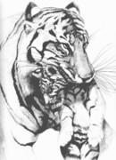 Canadian Art Drawings Drawings Posters - Tiger Mom Poster by Bob Patterson
