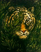 Dark Eyes Pastels Prints - Tiger on the prowl Print by C Ballal