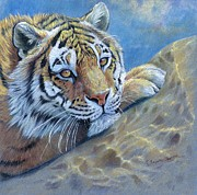 Red Rock Mixed Media - Tiger on the Rock by Svetlana Ledneva-Schukina