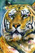 Watercolor Tiger Prints - Tiger Portrait 2 Print by John D Benson