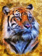 Wild Cat Prints - Tiger Portrait Print by Jai Johnson