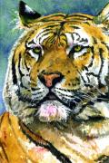 Watercolor Cat Paintings - Tiger Portrait by John D Benson