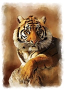 Tiger Portrait  Print by Michael Greenaway