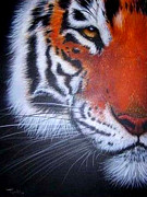 Tim Towler - Tiger Portrait