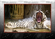 Yawning Framed Prints - Tiger Roar Framed Print by Carolyn Marshall