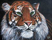 Clifton Painting Posters - Tiger  Poster by Sandy Clifton