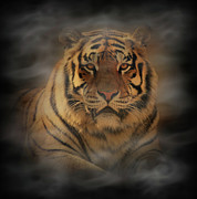 Wild Animal Digital Art Framed Prints - Tiger Framed Print by Sandy Keeton