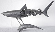 Tiger Shark Sculptures - Tiger Shark by Stuart Peterman