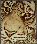 Tiger Pyrography Originals - Tiger Stare by Angel Abbs-Portice