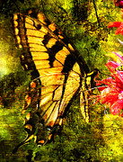 Layered Digital Art Posters - Tiger Swallowtail Butterfly Happily Feeds Poster by J Larry Walker