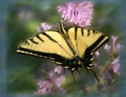 Tiger Swallowtail Digital Art Framed Prints - Tiger Swallowtail Painting Framed Print by Crystal Garner