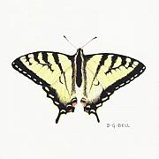 Tiger Swallowtail Posters - Tiger Swallowtail Single Poster by Betsy Gray