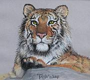 Portrait Pastels Prints - Tiger Print by Tanja Ware