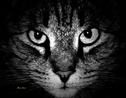 Black Adn White Photo Digital Art Posters - Tiger Tiger 2 Poster by Dale   Ford