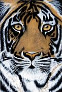 Black Pastels Framed Prints - Tiger Tiger burning bright Framed Print by Jan Amiss