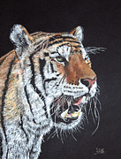 The Tiger Drawings - Tiger Tiger Burning Bright by John Hebb