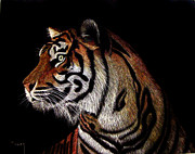Tiger Art Mixed Media - Tiger tiger by Linda Hiller