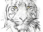 Tigress Digital Art - Tiger by Tilly Williams