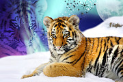 Big Cat Digital Art Acrylic Prints - Tiger Treasures Acrylic Print by Julie L Hoddinott