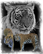 Cats Digital Art Digital Art Prints - Tiger Tribute Print by Larry Linton