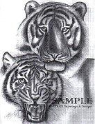 Business Cards Drawings Posters - Tigers Poster by Rick Hill