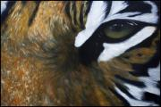 Insight Paintings - Tigers Vision by Julie Bond
