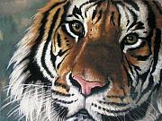 Big Cat Pastels Posters - Tigger Poster by Barbara Keith