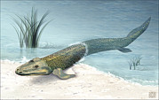 Missing Link Posters - Tiktaalik Prehistoric Fish, Artwork Poster by National Science Foundation
