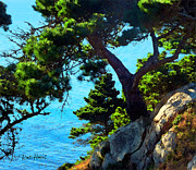 Seacape Prints - Timber Cove in Sonoma Coast Print by Russ Harris