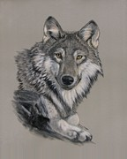 Wild Animal Pastels Posters - Timber Wolf Poster by Gloria Hager