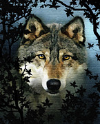 Yellow Eyes Posters - Timber Wolf Poster by Robert Foster