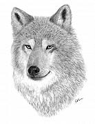 Timber Drawings Posters - Timber Wolf Poster by Rosanna Maria
