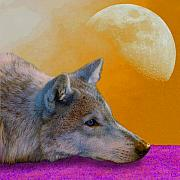 Wild Mixed Media Framed Prints - Timber Wolf Under the Moon Framed Print by Tina B Hamilton