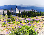 Timberline Framed Prints - Timberline Lodge at Mt Hood Framed Print by Vicki Jauron