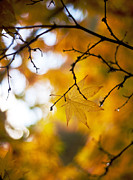 Colorful Leaves Photos - Time of the Season by Mike Reid