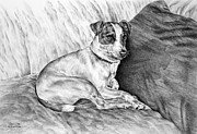 Terrier Dog Drawings Framed Prints - Time Out - Jack Russell Dog Print Framed Print by Kelli Swan