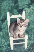 Baby Kitten Art Framed Prints - Time Out Framed Print by Amy Tyler