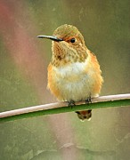 Tiny Bird Photos - Time Out by Fraida Gutovich