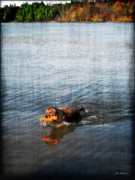 Water Retrieve Posters - Time to Fetch Poster by Joan  Minchak