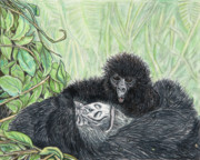 Gorilla Drawings - Time To Get Up by Stephen Taylor