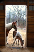 Foal Framed Prints - Time to Go Inside Framed Print by Judi Quelland