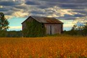 Yellow Barn Acrylic Prints - Time to harvest Acrylic Print by Robert Pearson
